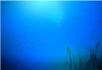 海底鱼群水草