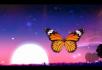 唯美荷塘蝴蝶