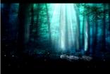 魔幻绿色森林
