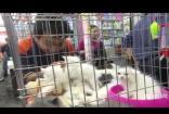 小猫小狗宠物店