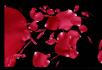 婚庆转场视频素材玫瑰