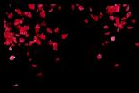 婚礼遮罩花瓣