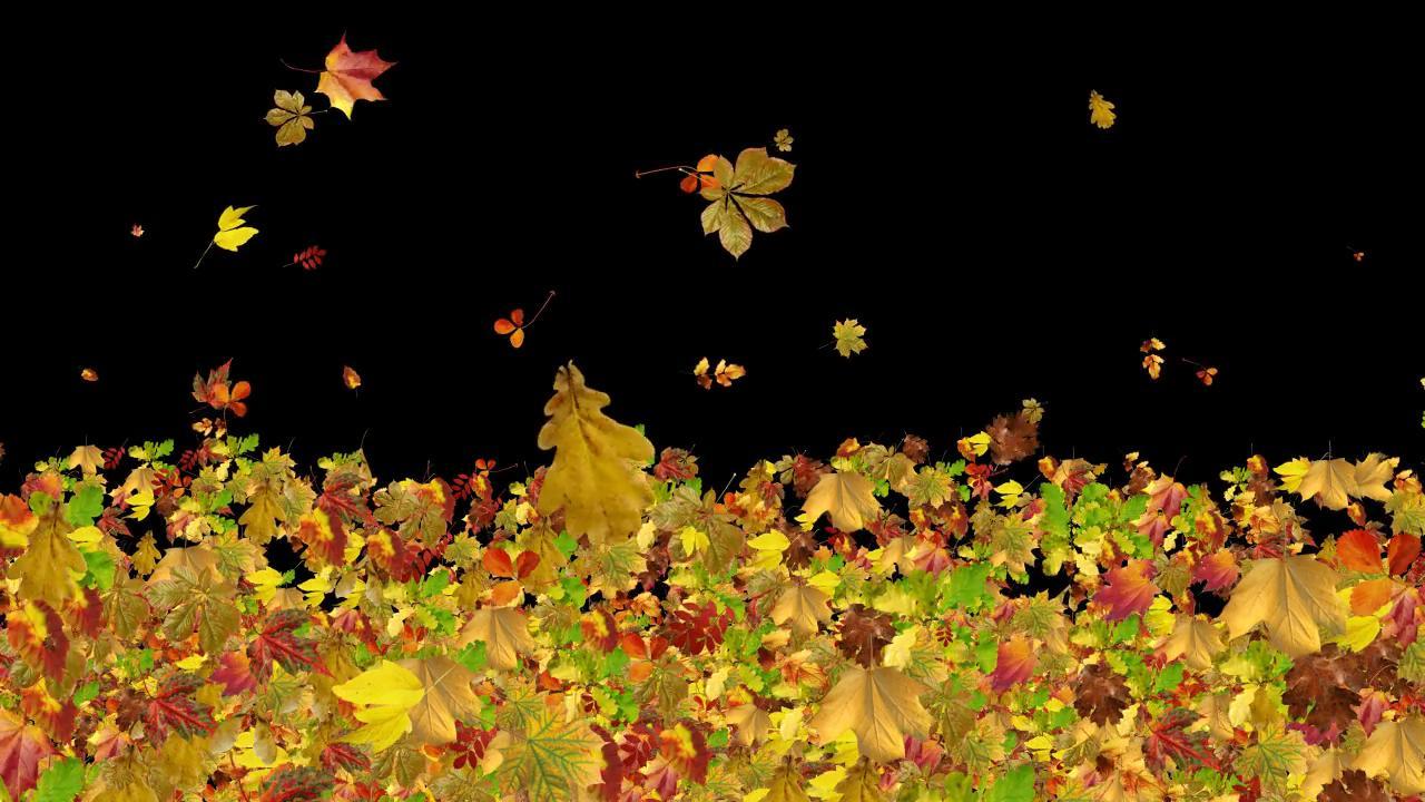 飘落与燃烧的秋叶动态