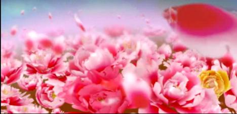 唯美花瓣飘落