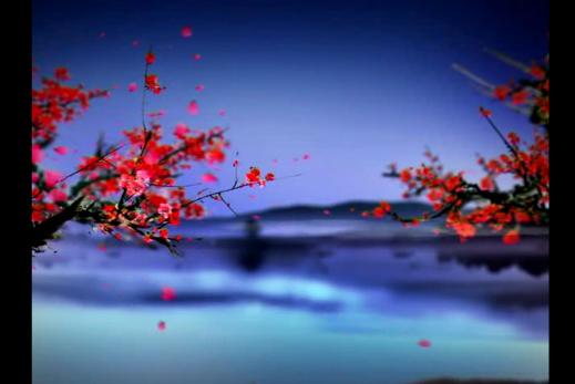 花瓣 桃花 飄落 玫瑰花 花瓣花落落花通道