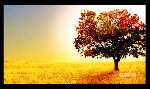 金色麥浪 天空 云彩 大樹 秋色