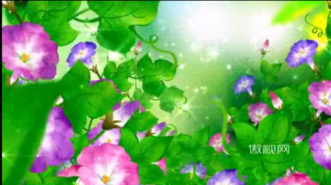 牵牛花喇叭花绿叶紫花